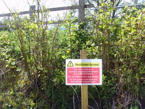 Japanese Knotweed 2015